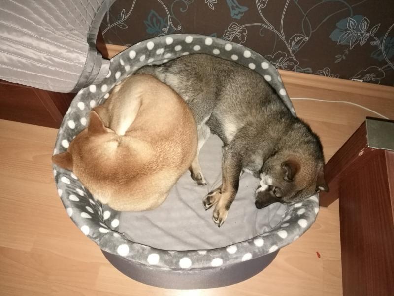 spanko
